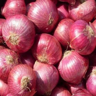 Biocarve Onion Seed