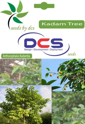 DCS Kadam Tree ( 4 Gm Per Packet) Seed
