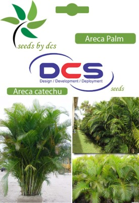 DCS Areca Palm Forest Plant(10 Seeds Per Pack) Seed