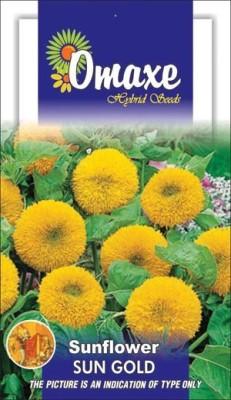 Omaxe SUNFLOWER SUNGOLD -TEDDY BEAR SUMMER FLOWER SEEDS-AVG 40/50 SEEDS BY OMAXE Seed