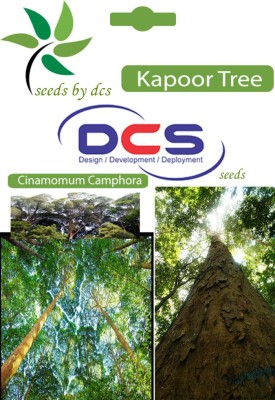 DCS Kapoor Forest Plant (10 Seeds Per Pack) Seed