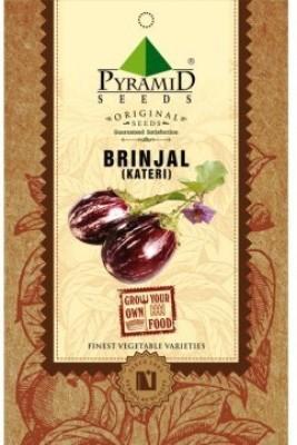 Pyramid Seeds Brinjal Kateri Seed