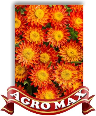 Agro Max HELICHRYSSUM TALL MIX Seed