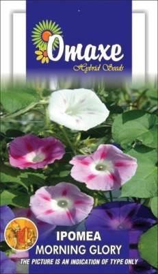 Omaxe IPOMEA MIXED SUMMER FLOWER SEEDS-AVG 40/50 SEEDS BY OMAXE Seed