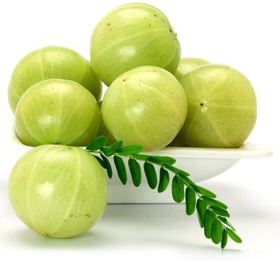 Real Seed Indian Gooseberry (Amla) Hybrid Herb Seed(35 per packet)