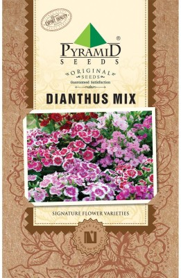 PYRAMID SEEDS DIANTHUS MIX Seed
