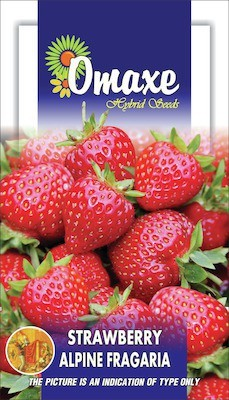 Omaxe STRAWBERRY ALPINE FRAGARIA 30 SEEDS PACK BY OMAXE Seed