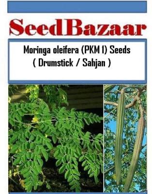 SeedBazaar Moringa Oleifera (PKM 1) / Drumstick Seed