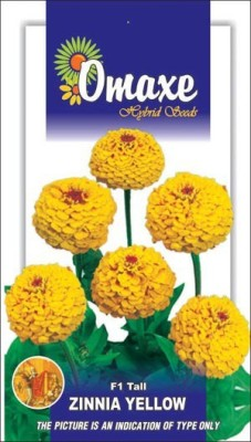 Omaxe ZINNIA F1 TALL YELLOW SUMMER FLOWER SEEDS-AVG 40/50+ SEEDS BY OMAXE Seed