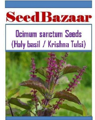 SeedBazaar Holy Basil (Krishna Tulsi) / Ocimum sanctum Seed