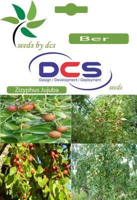 DCS Ber Forest Plants (10Seeds Per Pack) Seed