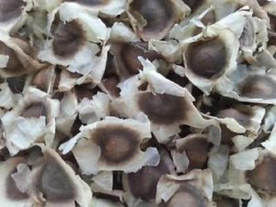 Seedbazaar Drumstick / Moringa oleifera (PKM 2) Seed