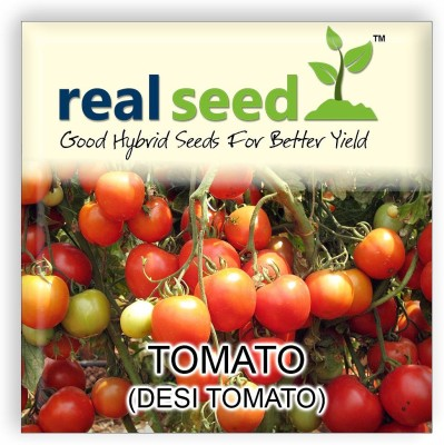 Real Seed Tomato (Desi Tomato) Export Quality Seed