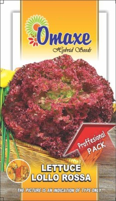 Omaxe LETTUCE LOLLO ROSSO 10GM/300++ SEEDS BY OMAXE Seed