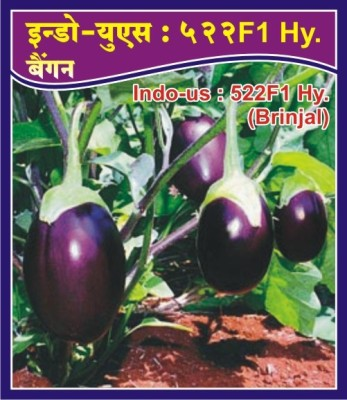 Indous Agriseeds Indo Us 522 F1 Hy.Brinjal Seeds 2400 Per Packet Of Seeds Seed
