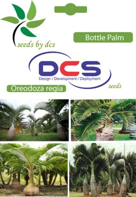 DCS Bottle Palm Forest Plant (10 Seeds Per Pack) Seed