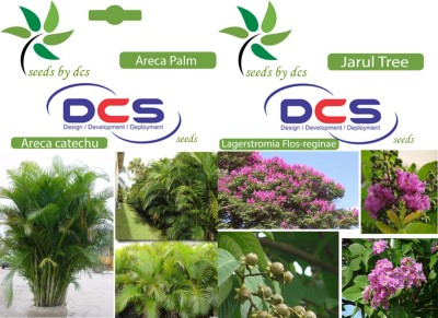 DCS Areca Palm & Jarul Tree (2 Packets of Seeds) Seed
