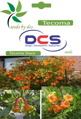 DCS Tecoma Forest Plants (5g Seeds Per Pack) Seed