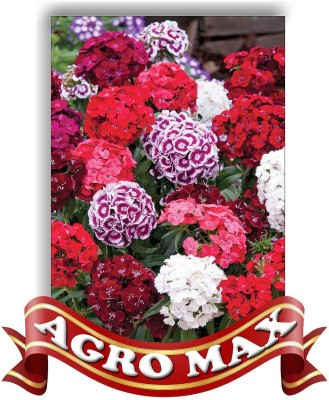 Agro Max DIANTHUS DOUBLE MIX Seed