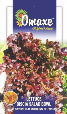 Omaxe LETTUCE BISCIA-SALAD BOWL RED 50+SEEDS PACK BY OMAXE Seed