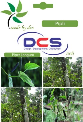DCS Pipli Forest Plants (10 Seeds Per Pack) Seed