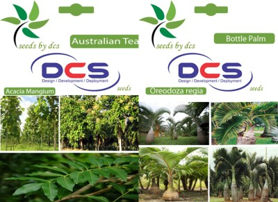 DCS Australian Teak & Bottle Palm (2 packets of seeds) Seed
