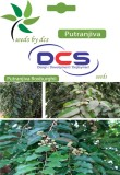 DCS Putranjiva Forest Plant (Per Pack 10...