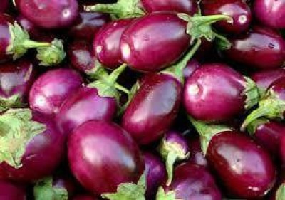 Green Octane Brinjal (Pack of 4) Seed