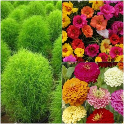 Biocarve Best Selling Summer flower kit pack of 3 Seed