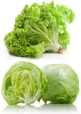 Real Seed Lettuce Ice Berg Salista F1 Hybrid Imported Vegetable Seed