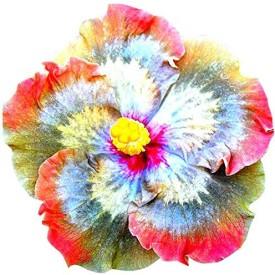 Futaba Giant Hibiscus Flower Seed(50 per packet)