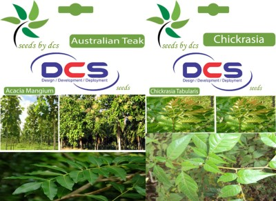 DCS Australian Teak & Chickrasia (2 Packet of seeds) Seed