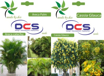 DCS Areca Palm & Cassia Glauca(2 Packet of Seeds) Seed