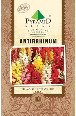 PYRAMID SEEDS ANTIRRHINUM Seed