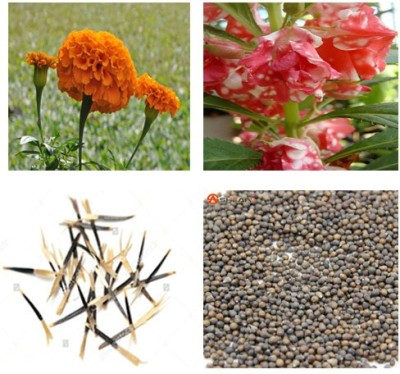 Alkarty marigold and balsam seed Seed