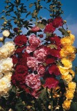 Farm Seeds Balsam Double Mixed Seed (100...