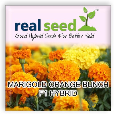 Real Seed Marigold Orange Bunch F1 Hybrid Imported Flower Seed