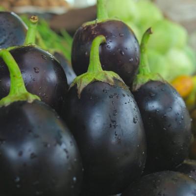Shubh-Bhakti BrinjalFine Seed