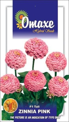 Omaxe ZINNIA F1 TALL PINK SUMMER FLOWER SEEDS-AVG 40/50+ SEEDS BY OMAXE Seed