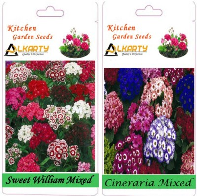 Alkarty Sweet William Mixed and Cineraria Mixed (Winter) Seed
