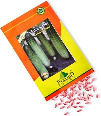 Pyramid Seeds Hybrid Cucumber-Herlong Seed