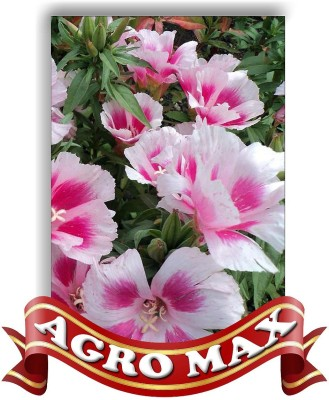 Agro Max GODETIA SELECTED MIX Seed