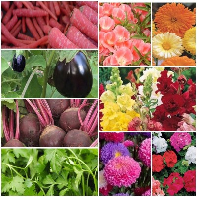 Biocarve All Garden Flower Kit and Vegetables Seed