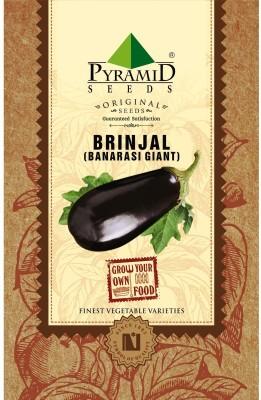 Pyramid Seeds Brinjal Banarshi Giant Seed
