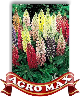 Agro Max LUPIN ANNUAL MIX Seed