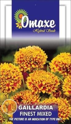 Omaxe GAILLARDIA FINEST MIXED SUMMER FLOWER SEEDS-AVG 40/50 SEEDS BY OMAXE Seed