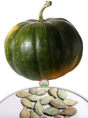 Agro Max Pumpkin - Kaddoo Export Quality Vegetable Seed