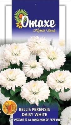 Omaxe DAISY BELLIS WHITE WINTER FLOWER 50 SEEDS PACK BY OMAXE Seed
