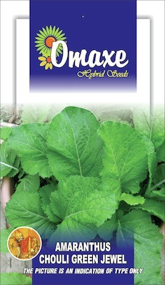 Omaxe AMARANTHUS GREEN CHOULAI JEWEL 50 SEEDS BY OMAXE Seed