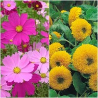 Biocarve Summer flower kit for Borders pack of 2 Seed(2 per packet)